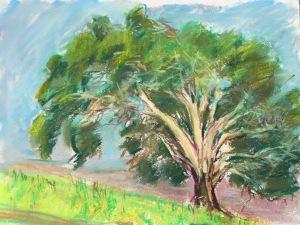 Eucalyptus #1 at Laguna Lake, San Luis Obispo, CA