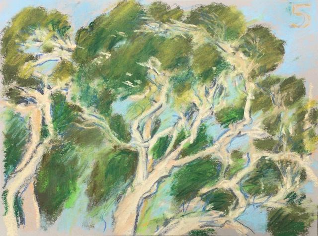 Eucalyptus #5 at Laguna Lake, San Luis Obispo, CA
